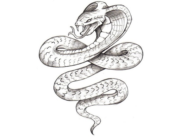 Cobra Tattoo Designs